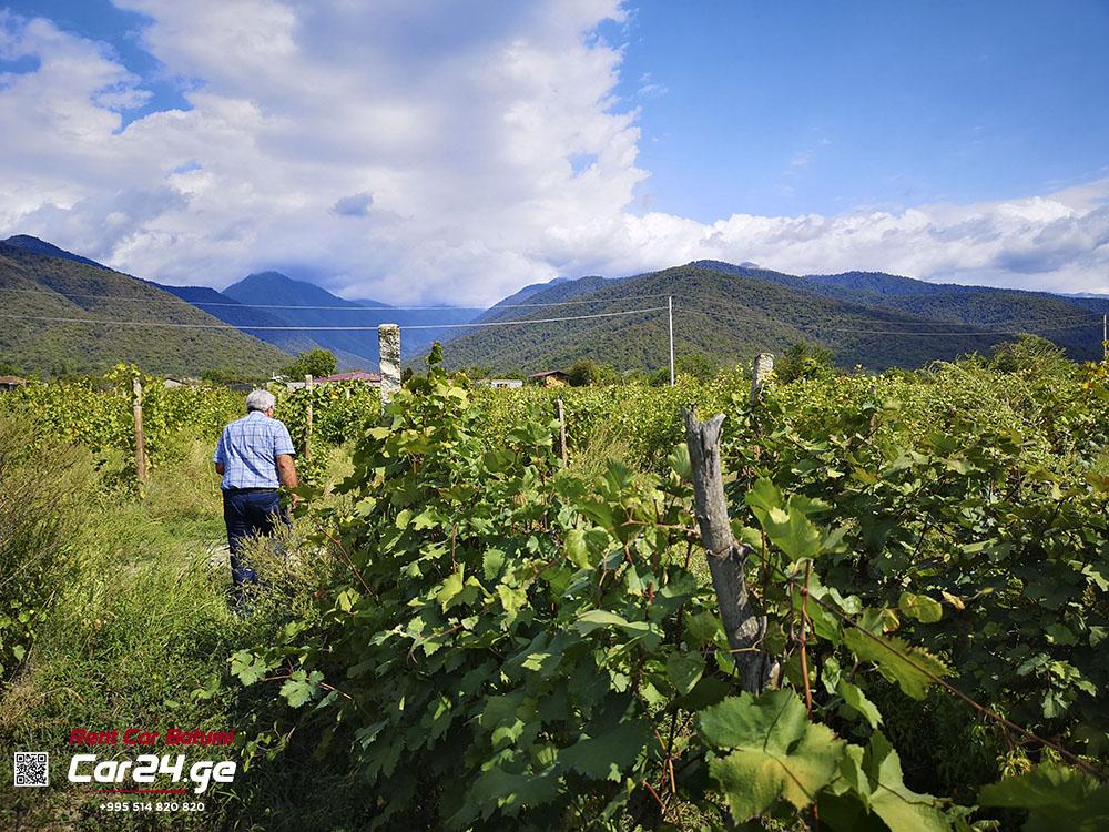 виноградники Кахетии микрозона Напареули